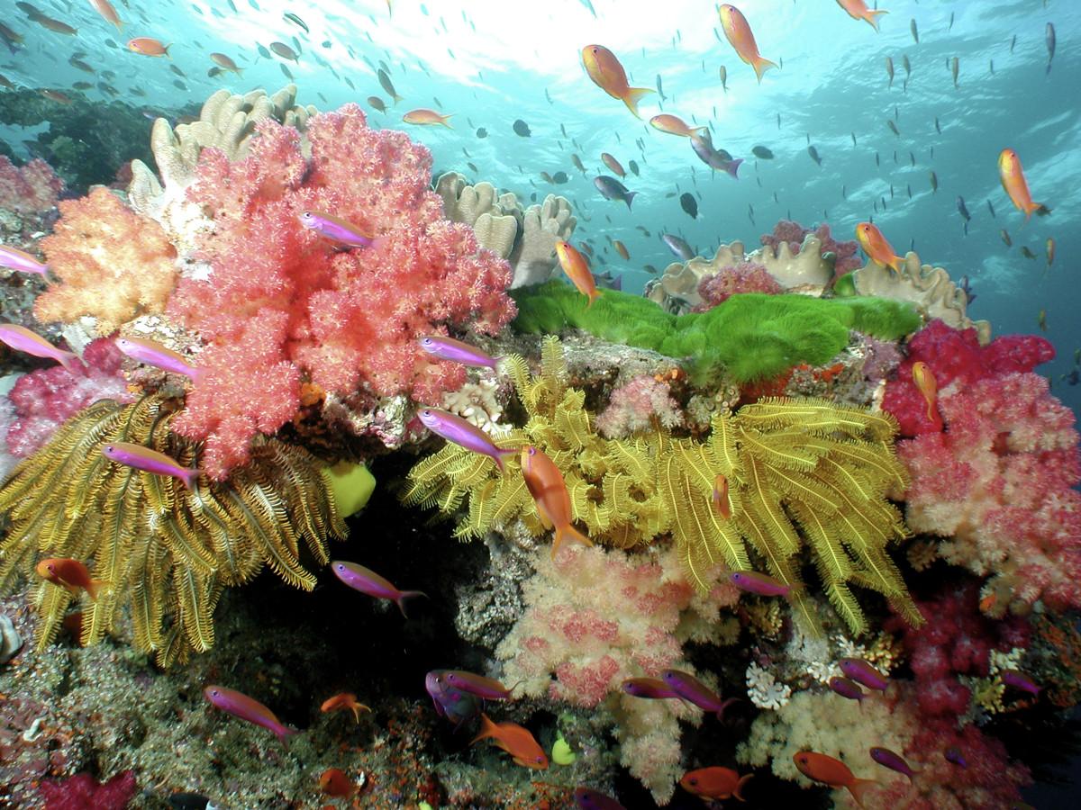 Soft Corals, Crinoids and Anthias. © WWF / Catherine HOLLOWAY