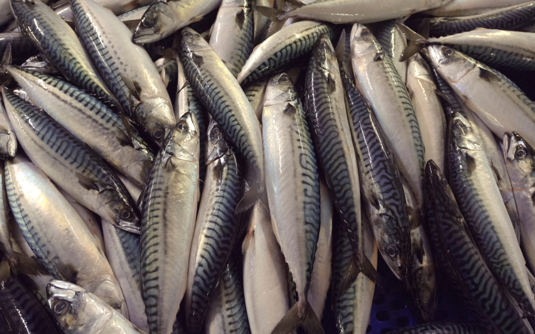 Dia da Dependência de Pescado, o dia em que Portugal fica sem peixe