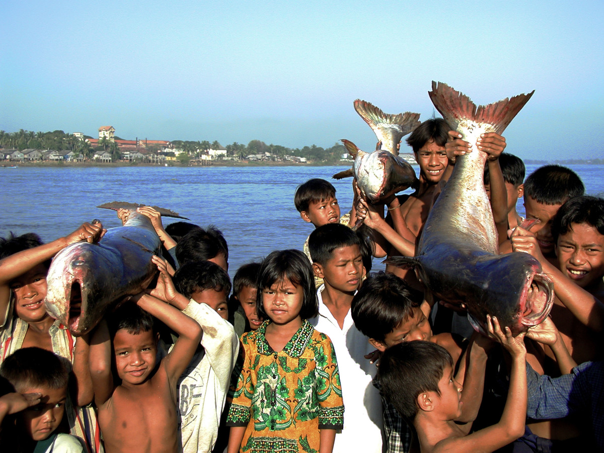 Crowd of children with Pra or River catfish. Cambodia. © WWF-Canon / Zeb HOGAN