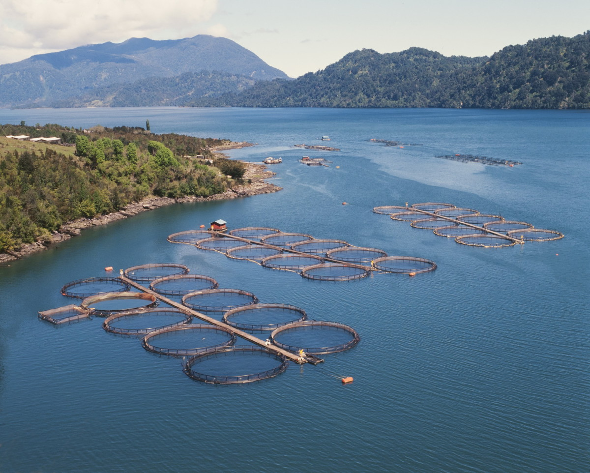cage salmon farm in southern Chile © MARCELODLT / Shutterstock.com