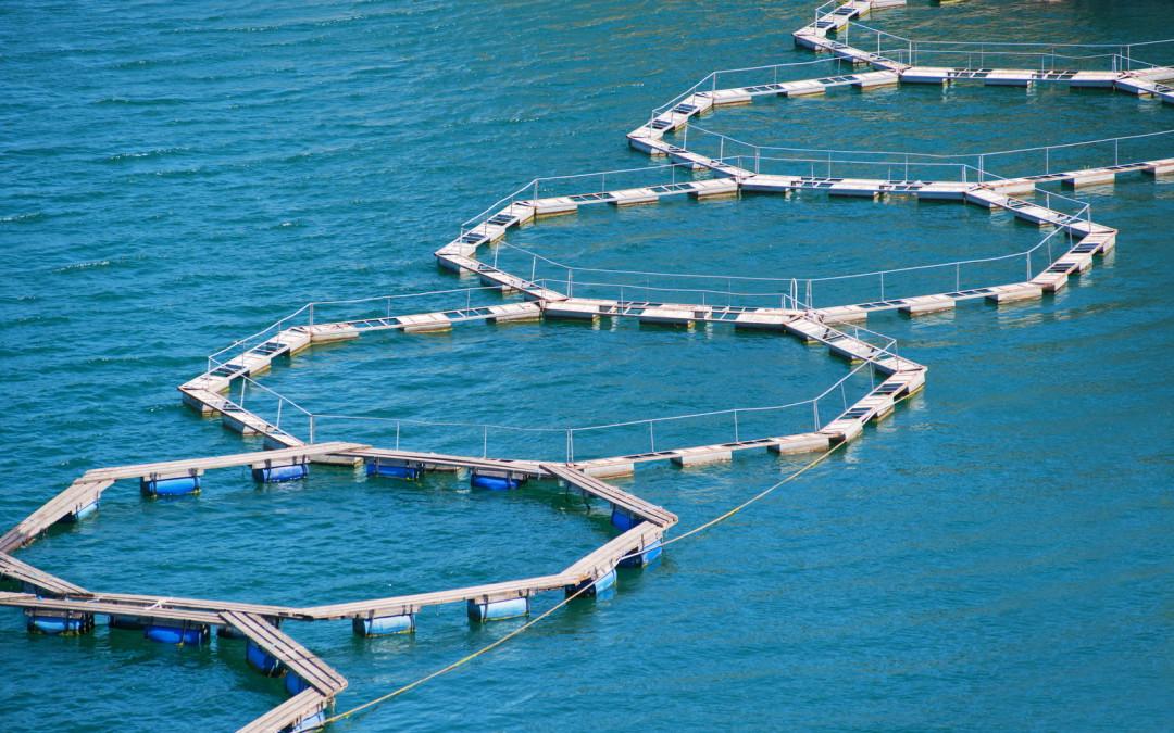 Mais acerca das vantagens do peixe e marisco sustentável