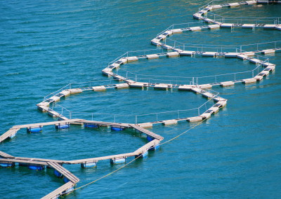 More about environmental advantages of sustainable seafood