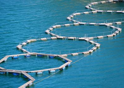 Βιώσιμα ψαρικά και περιβαλλοντικά οφέλη