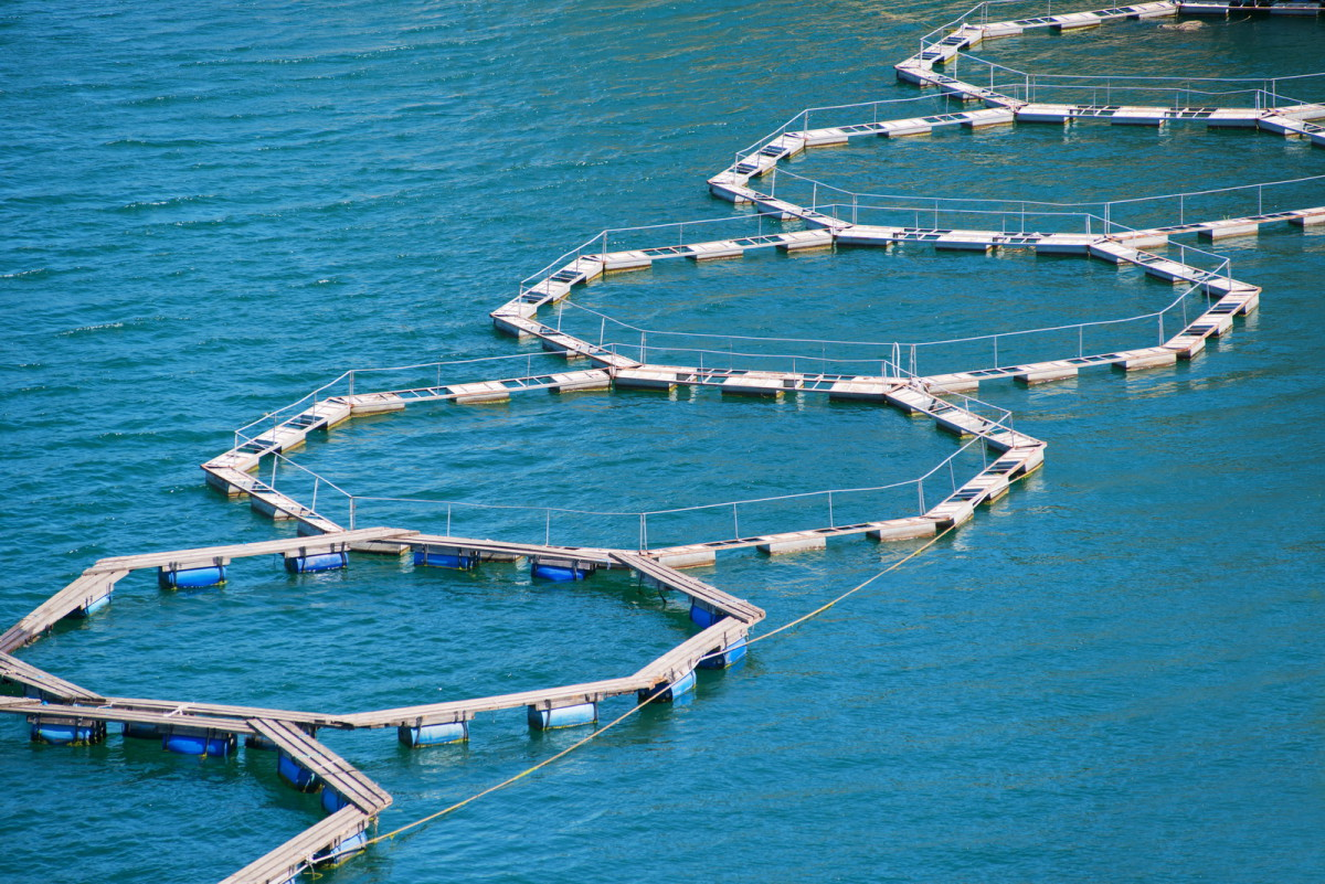 Fish Farm with floating cages. © sezer66 / Shatterstock.com
