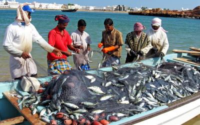 Продукцията на стопанските рибарства достига лимита си