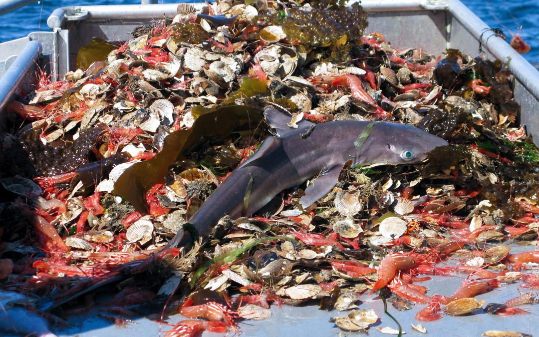 La humanidad pesca 32 millones de toneladas de peces a escondidas