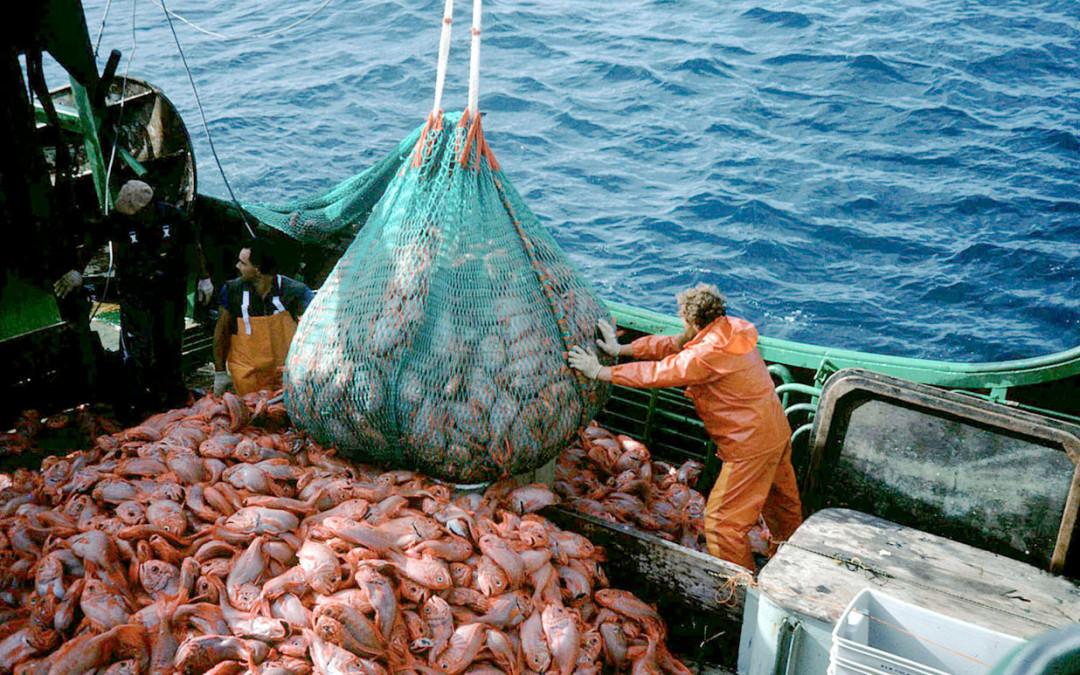 Überfischung – Eine Tatsache in Zahlen