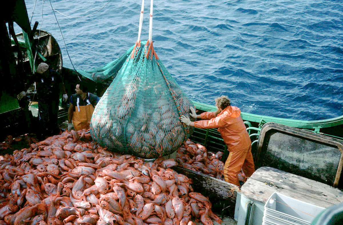 Orange roughy trawler. © AFMA