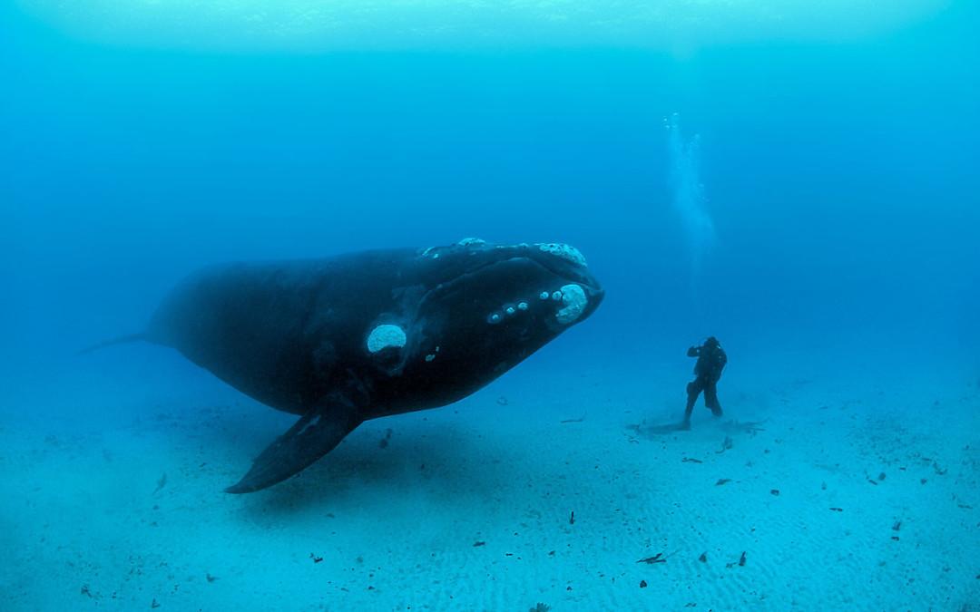 Um fascínio por animais marinhos