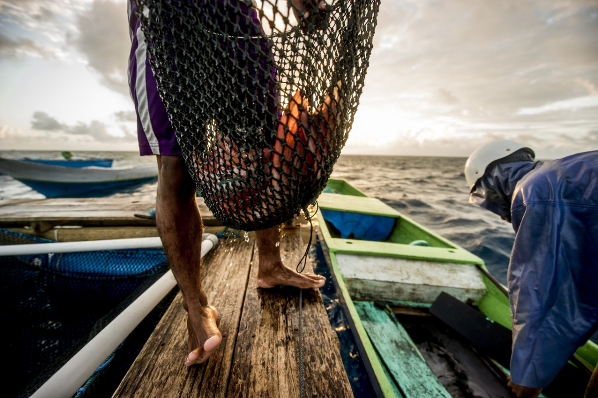 Bajau fisherman carries his catch in Tomian Island,  Indonesia. © James Morgan  / WWF
