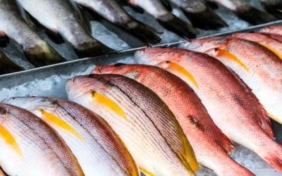 Fischen in Absurdistan