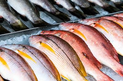 Según una encuesta, hasta un 75% de los entrevistados elegiría pescados y mariscos sostenibles