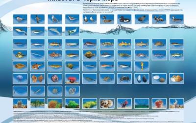 Необходими са спешни мерки за оценка на рибните запаси в Черно море