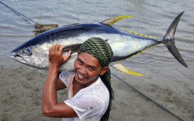 WWF zum Welt-Fischereitag: Jeder zehnte Mensch lebt von Fisch