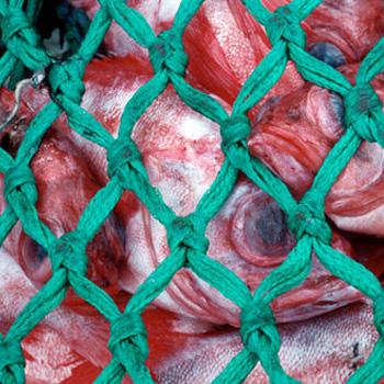 Hausaufgaben für die Fischerei