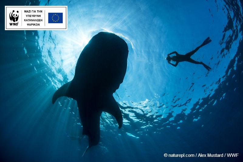 Τρείς νεκροί από καρχαρία και 12 από selfies… Μήπως να αναθεωρήσουμε;