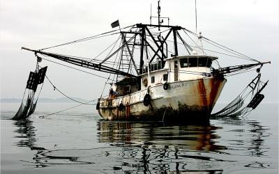 Einfuhrkontrollen ungenügend, um illegale Fischereierzeugnisse aus EU-Markt fernzuhalten
