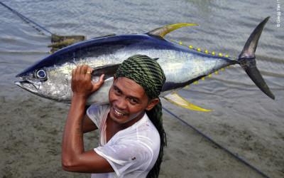 WWF și companii din industria tonului solicită reducerea cu 20% a capturilor de ton cu înotătoare galbene
