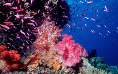 Tag des Meeres: Halbierung mariner Populationszahlen bedroht Lebensgrundlage von Millionen