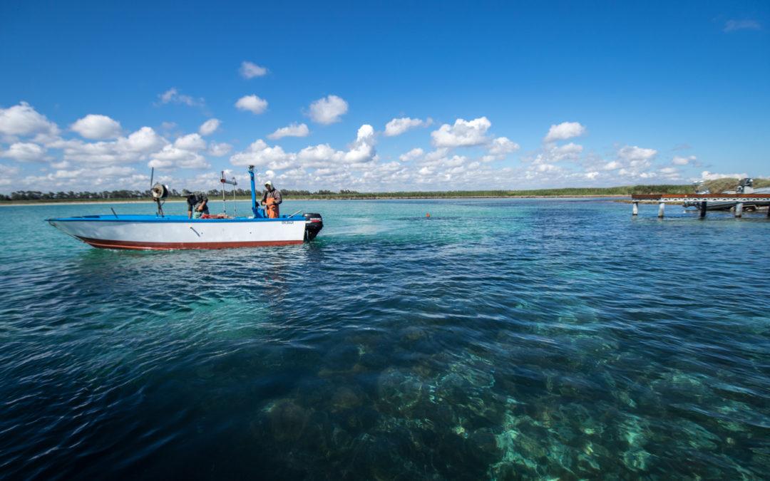 GIORNATA DEGLI OCEANI WWF: MARE BOLLENTE E PESCA INSOSTENIBILE