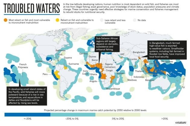 Nutrition: Fall in fish catch threatens human health