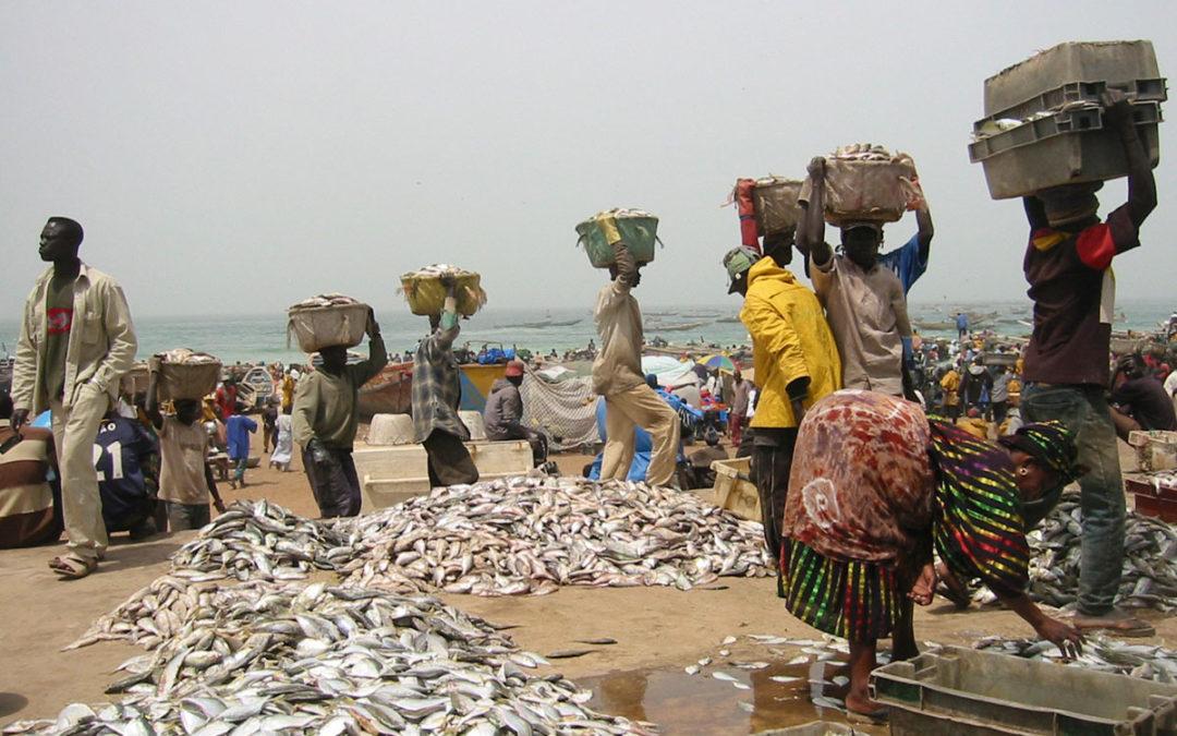 ¿Nos quedamos sin pescado?