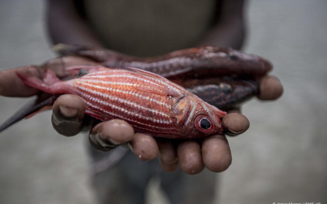 Ist Aquakultur die Lösung für überfischte Meere?