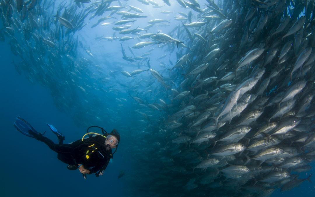 Céline Cousteau: este important ca oamenii să înțeleagă că depind de oceane