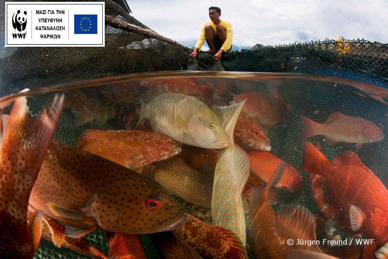 Ιστορικό ρεκόρ στα 20 κιλά ετησίως η κατακεφαλήν κατανάλωση ψαρικών παγκοσμίως