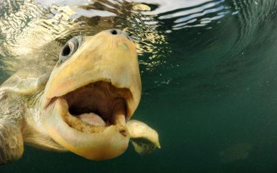 Erfolg: Mit innovativem Ansatz 20.000 Meerestiere retten!