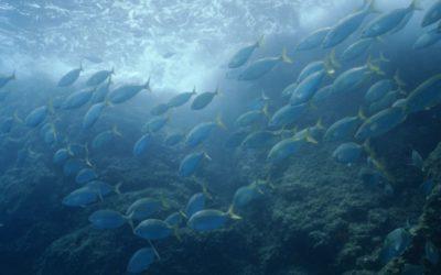 EU verbietet Bodenschleppnetze in Tiefsee