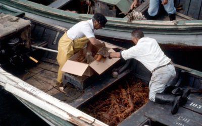 Certificarea conform standardului MSC sprijină asigurarea viitorului unei industrii vitale în Insulele Juan Fernández din Chile