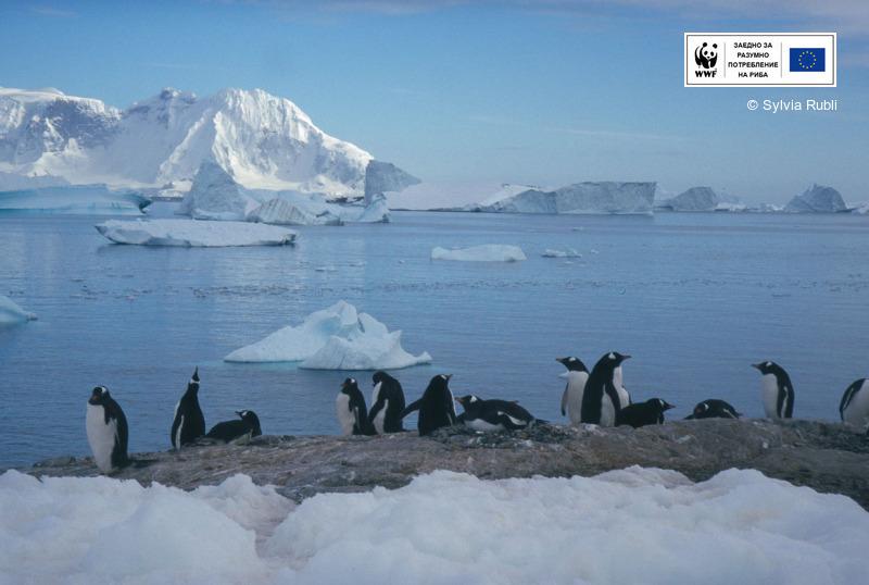 Морето на Рос в Антарктика стана най-голямата морска защитена територия в света