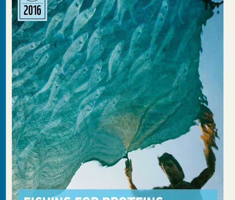 Relatório WWF: futuro incerto para milhões de pessoas que dependem de peixe como fonte de proteína