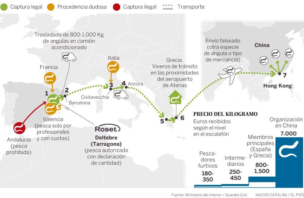 El viaje ilegal de la angula: del Guadalquivir a los mercados de China