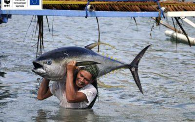 Όταν η Ευρώπη καταναλώνει βιώσιμα ψάρια, ωφελούνται οι αναπτυσσόμενες χώρες