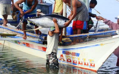 la UE es un motor para el cambio en países en desarrollo por su demanda de atún pescado de forma sostenible