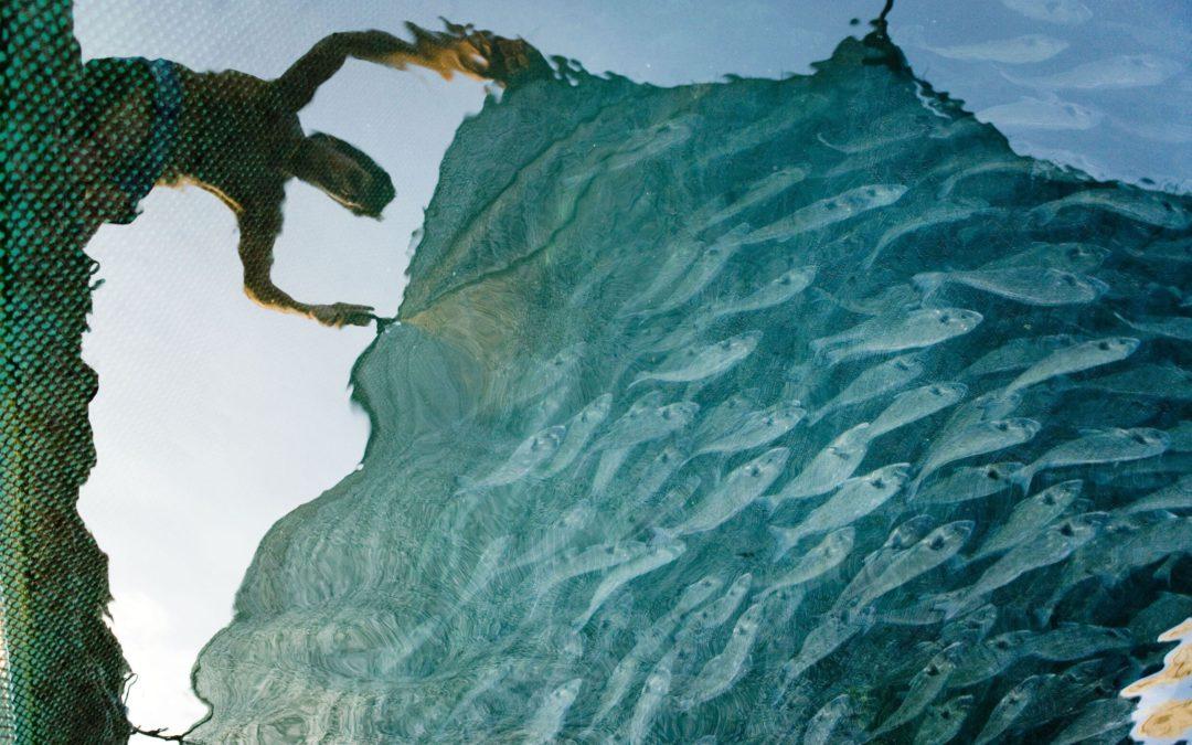 Informe WWF: Millones de personas de países en desarrollo podrían quedarse sin acceso al pescado en 2050