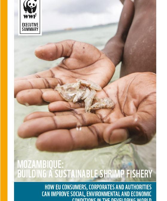 Novo relatório da WWF apela à gestão sustentável da pesca do camarão de Moçambique e aos consumidores que façam escolhas responsáveis