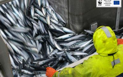 Важна конвенция за условията на труд в рибарския сектор влезе в сила