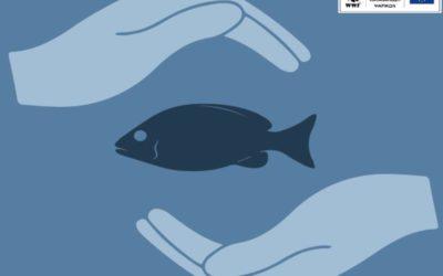 Ποια είναι τα ψάρια και τα θαλασσινά που απαγορεύεται να καταλήξουν στο πιάτο σου;
