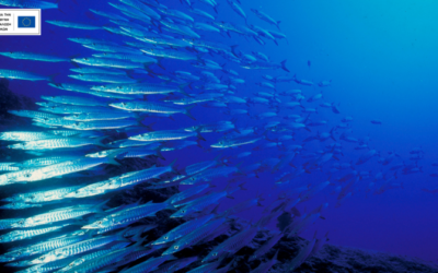 Fish Forward: ταξίδι με προορισμό την προστασία των θαλασσών μας!