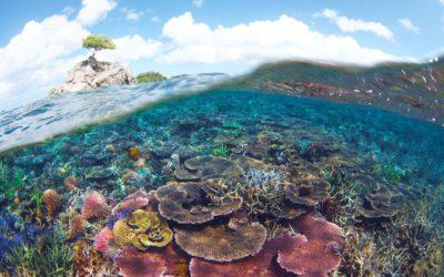 Karfreitags-Fisch mit gutem Gewissen: WWF Onlineratgeber