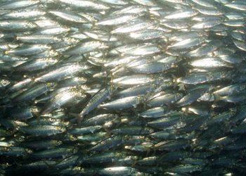 Überfischungswende verpasst
