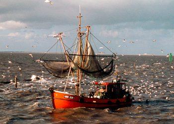 Überfischung Volldampf voraus
