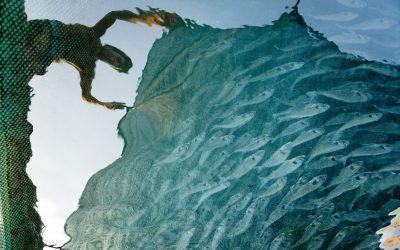 9 lipca – Dzień Zależności od Ryb – czy jutro w Europie skończą się ryby?