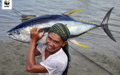 Odpowiedzialna konsumpcja ryb i owoców morza dziś, albo puste talerze i wyrzuty sumienia w przyszłości!