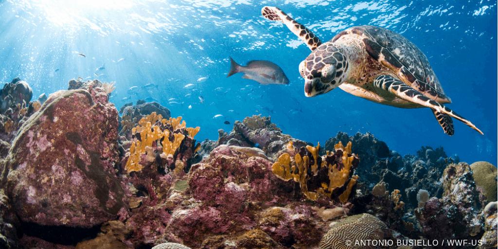 Il WWF a Fa' la cosa giusta:  la tutela dei mari passa dal nostro piatto.