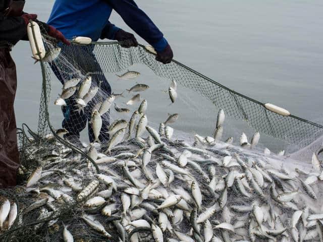 Как да сме сигурни, че рибата, която ядем, е безопасна?