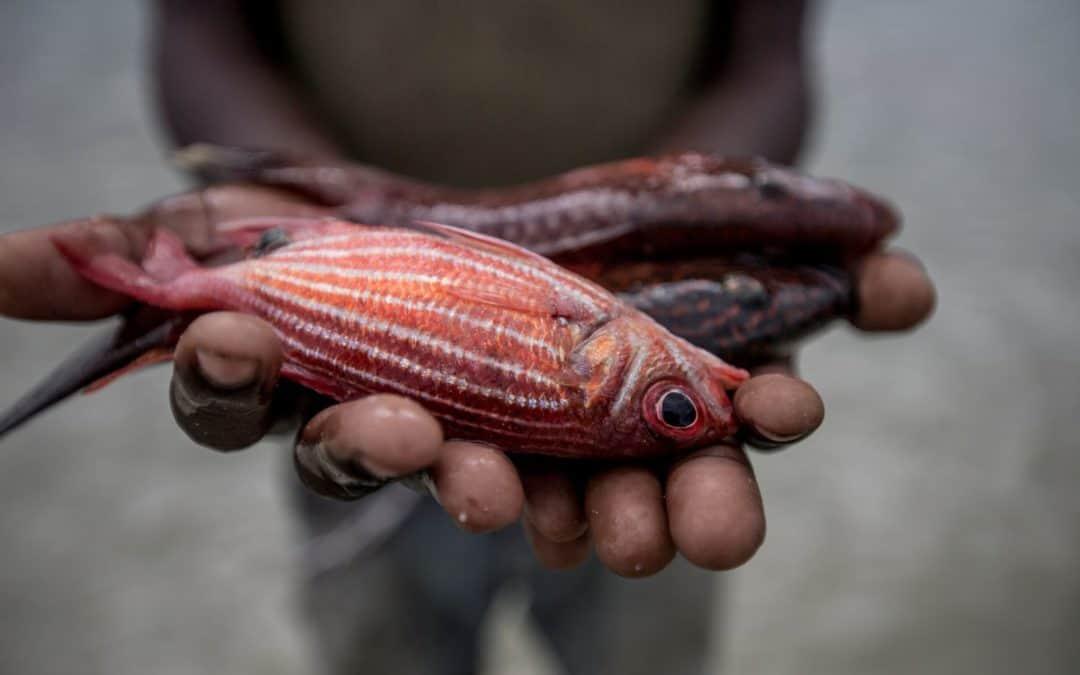 Europa sve brže ostaje bez ribe